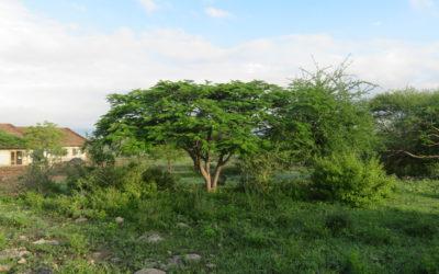 Landschapsplan Gundua Tanza, Tanzania